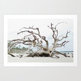 Driftwood Art Print