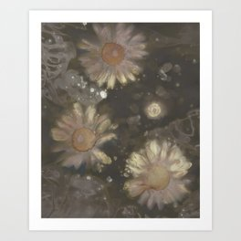 Gerbera Daisies IV Art Print