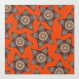 stapelia flower Canvas Print