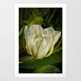 Double White Tulip by Teresa Thompson Art Print