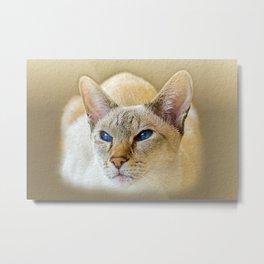 SIAMESE CAT LOVE Metal Print