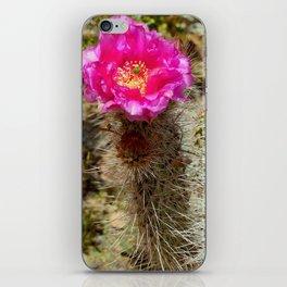 Hedgehog Cactus In Bloom iPhone Skin