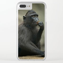 Celebes Crested Macaque Youngster Clear iPhone Case