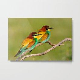 Portrait of pair a european bee-eater (Merops apiaster).  Metal Print