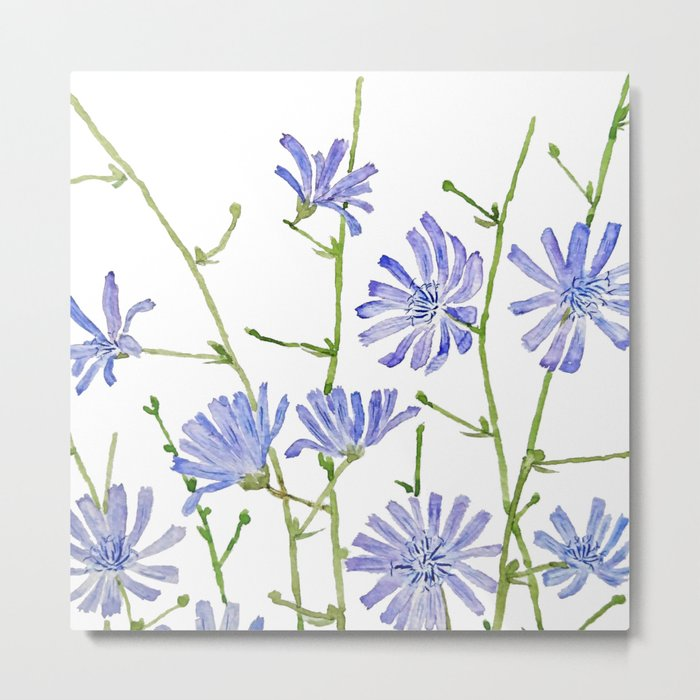 blue chicory watercolor Metal Print