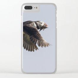 Atlantic puffin in flight with her sand eels Clear iPhone Case