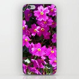 Primrose purple flower iPhone Skin