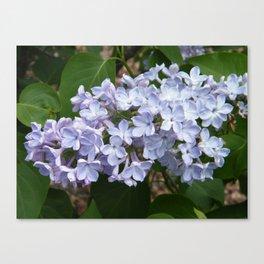 Lilac Beauty by Teresa Thompson Canvas Print