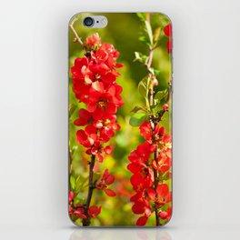 Chaenomeles shrub red flowering iPhone Skin