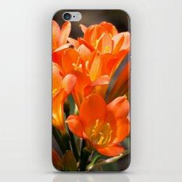 Bright Orange Clivia iPhone Skin