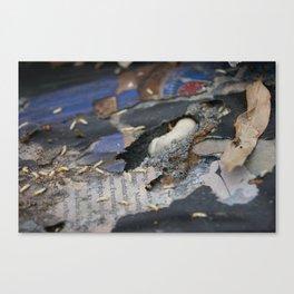 Hidden World Canvas Print