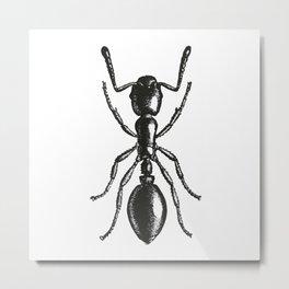 Ant 2 Metal Print