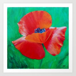 Single Poppy Art Print