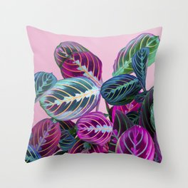Prayer Plants on a Pink Throw Pillow