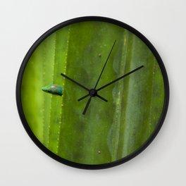 Peekaboo! A gecko in the agave Wall Clock