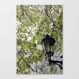Burst of Green Canvas Print