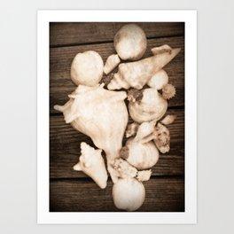 Tabletop Shells Art Print