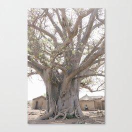 Baobab Tree- Ghana Canvas Print