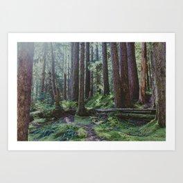 Forest Unknown Art Print