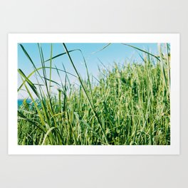 Sunny Grass Art Print
