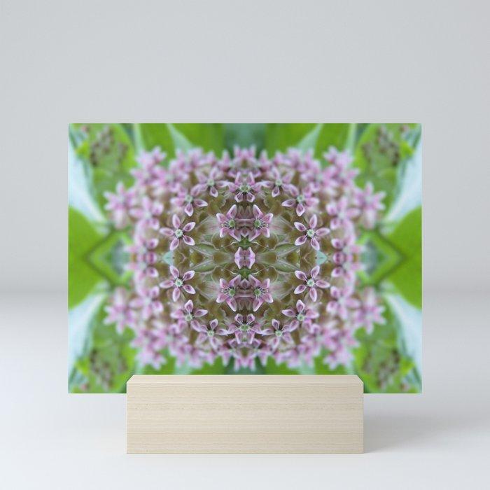 Kaleidoscope Pink Milkweed Flower Macro Photograph Mini Art Print