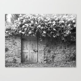 Old Italian wall overgrown with roses Canvas Print