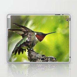 Hummingbird Dominance Laptop & iPad Skin