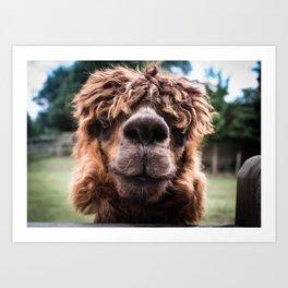 Curious Llama Art Print