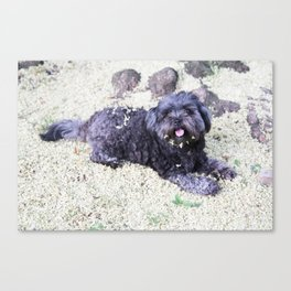 puppy blossom Canvas Print