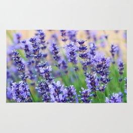 Violet lavender Rug