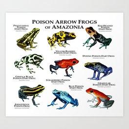 Poison Arrow Frogs of Amazonia Art Print