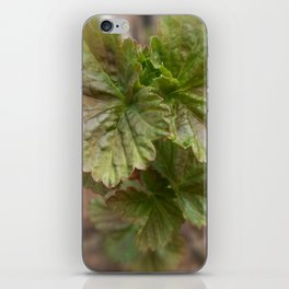 Currant Spring Leaves iPhone Skin