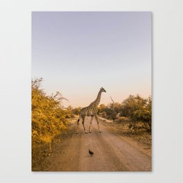 long necks Canvas Print