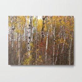 Autumn in Cheboygan, MI Metal Print
