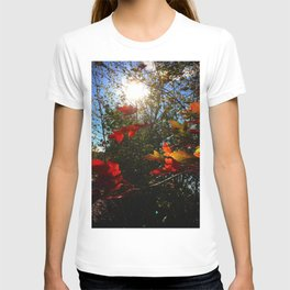 Autumn Leaves in the sun T-shirt