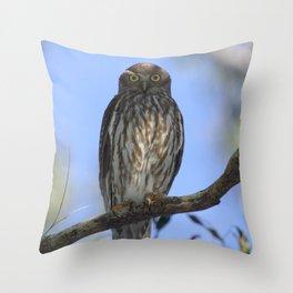 Barking Owl (Ninox connivens) Throw Pillow