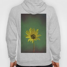 The yellow flower of my old friend Hoody