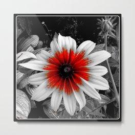 Flower   Flowers   Red Stroke Gaillardia   Red and White Flower   Nadia Bonello Metal Print