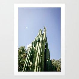 Cacti III Art Print