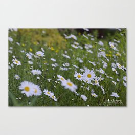 A Bed of Daisies Canvas Print