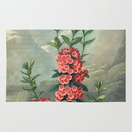 Pink Floral The Narrow-leaved Kalmia : Temple of Flora Rug