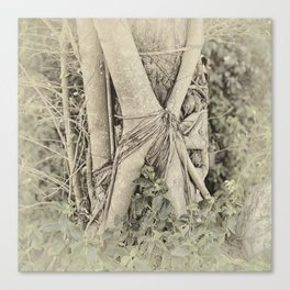 Strangler fig in forest Canvas Print