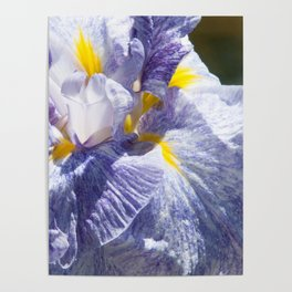 The love of the Iris by Teresa Thompson Poster