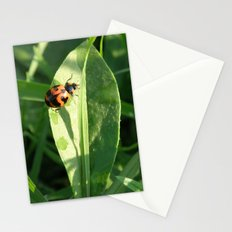 Basking in the morning light Stationery Cards