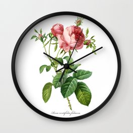 Vintage Rose - Redoute's Rosa Centifolia Foliacea Wall Clock
