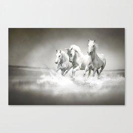 Wild White Horses Canvas Print