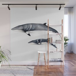 Minke whale with baby whale Wall Mural