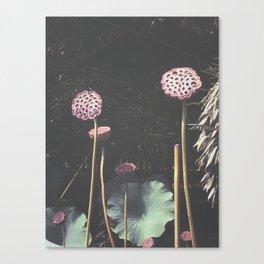 Lotus Seed Heads Canvas Print