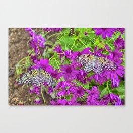 2 Tree Nymph Butterflies Canvas Print