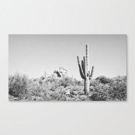 DESERT VII / Scottsdale, Arizona Canvas Print